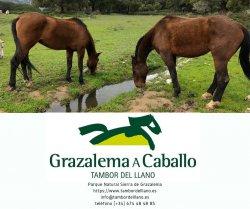 RESERVAS y Naturaleza_TAMBOR del LLANO Grazalema